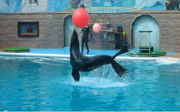 Дельфинарий в Адлере - Экскурсии в Сочи