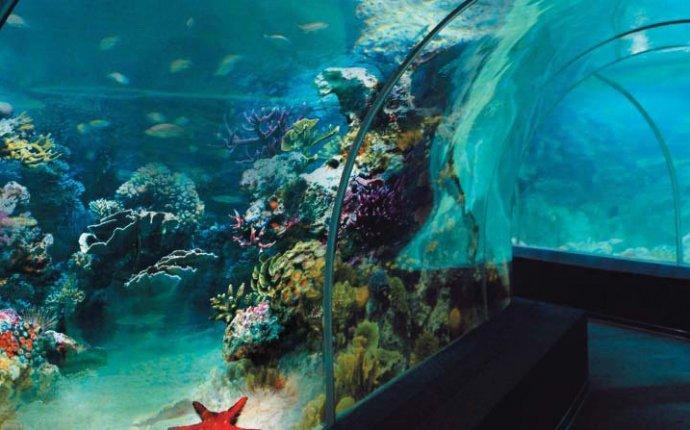 Океанариум Sochi Discovery World Aquarium Сочи
